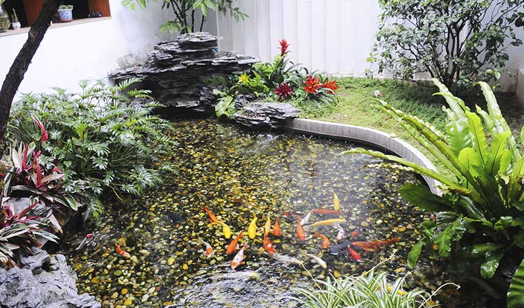 pond landscaping company example